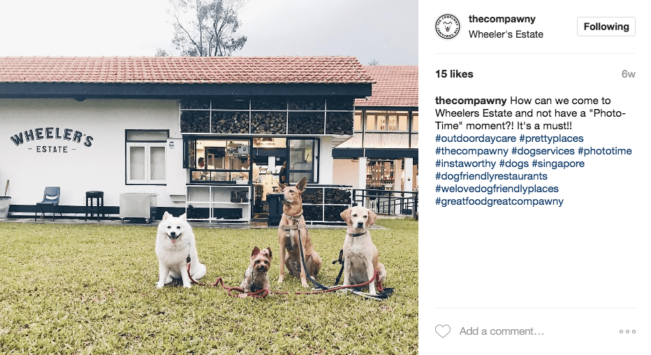 The Compawny Dog Daycare Singapore | Vanillapup