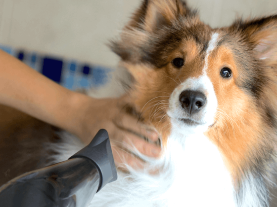 10 Things Your Dog Groomer Wishes You Knew | Vanillapup