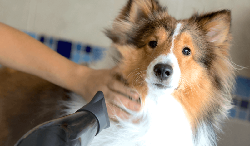 10 Things Your Dog Groomer Wishes You Knew   Vanillapup