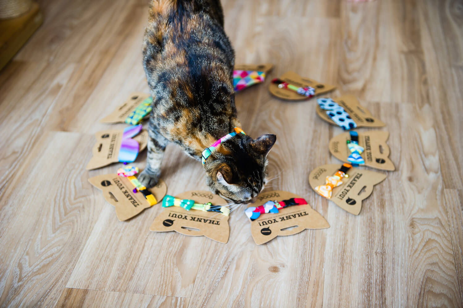 GOOOD Pet Collars | Vanillapup