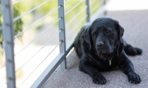 How to Tell When Your Dog Is in Pain | Vanillapup
