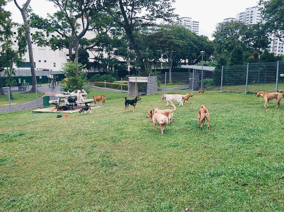 Clementi Woods Dog Run | Vanillapup