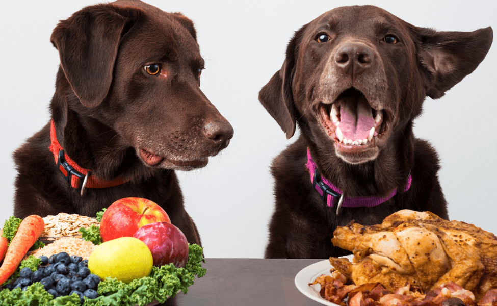 Help Your Dog Lose Weight   Vanillapup
