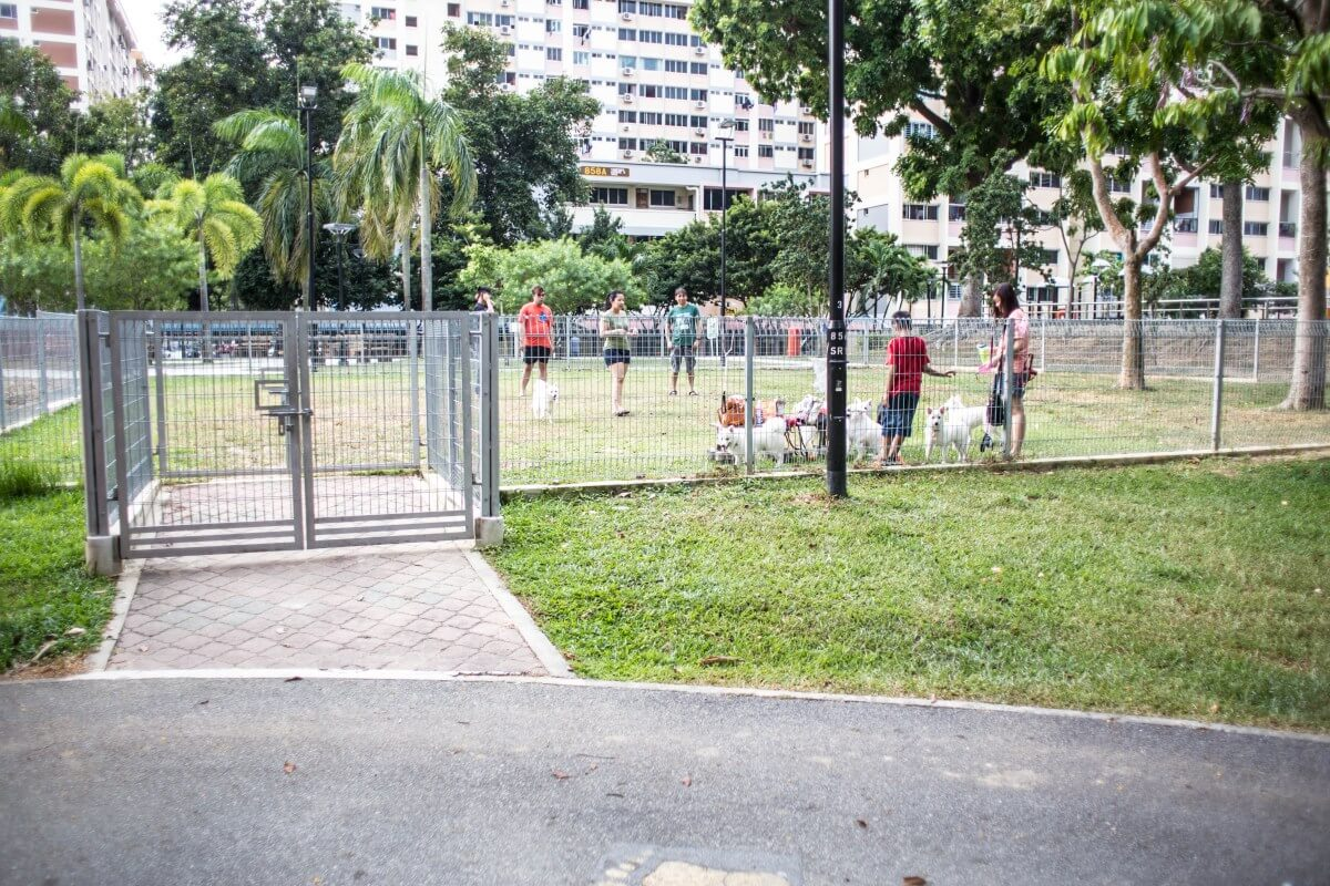 Tampines Central Park Dog Run | Vanillapup
