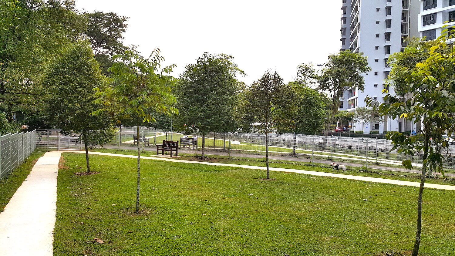 Yishun Park Dog Run | Vanillapup