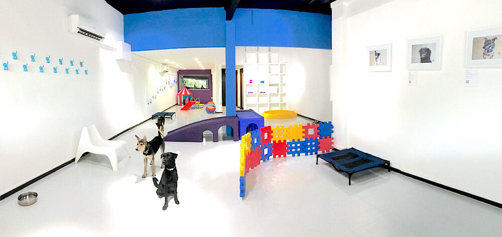 Doggies Galore Cage-free Daycare and Boarding   Vanillapup