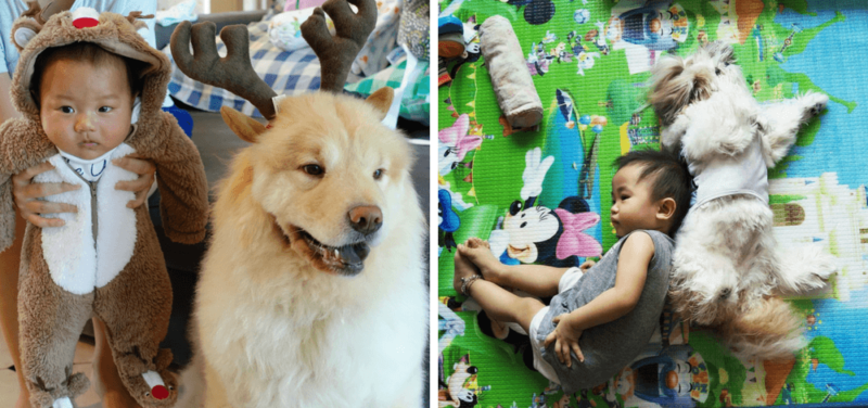 Introducing Babies and Dogs Tips | Vanillapup