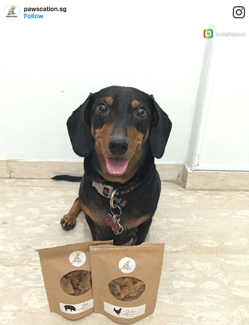 Pawscation Dog Treats | Vanillapup