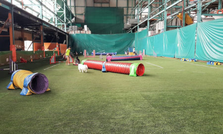 Singapore Indoor Dog Agility Arena Interior | Vanillapup