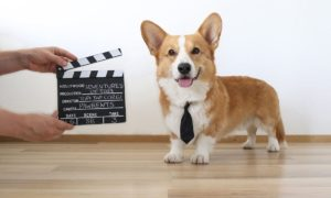 Topi the Corgi Action | Vanillapup