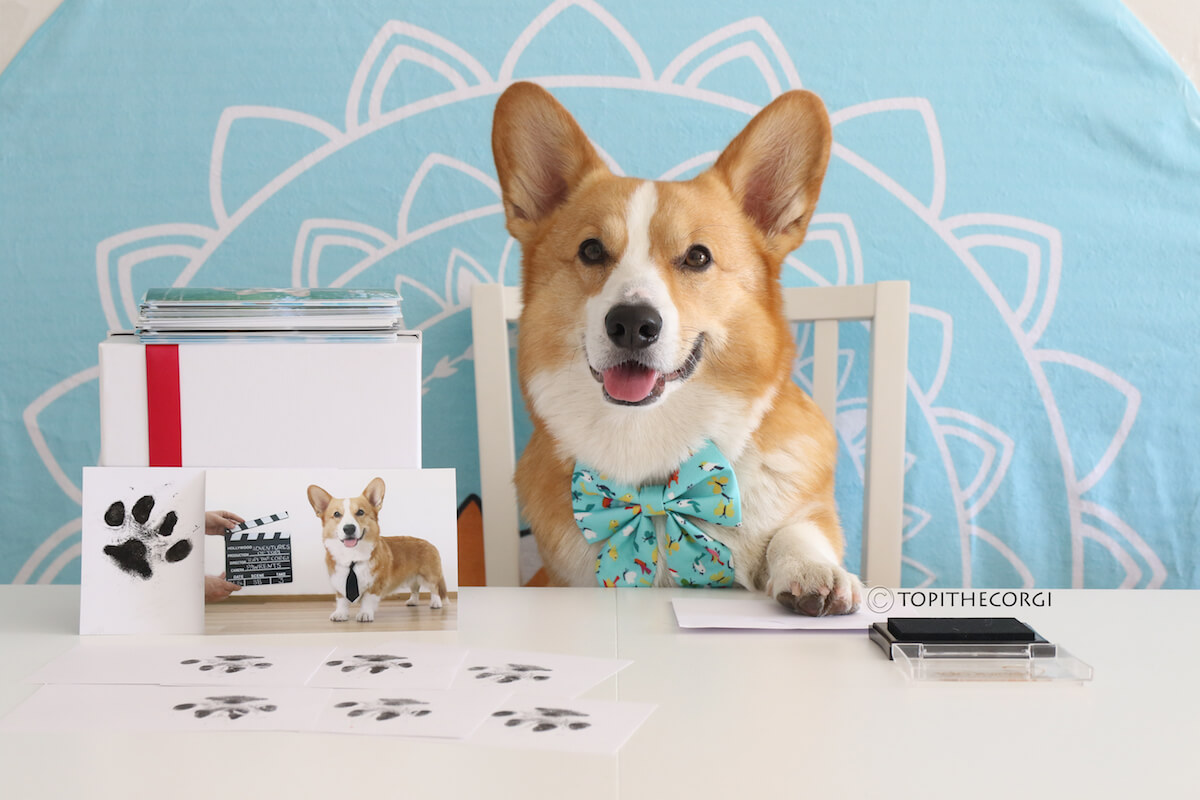 Topi the Corgi Merchandise | Vanillapup
