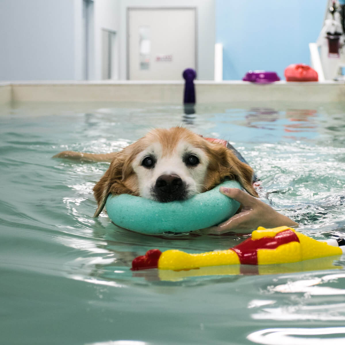 Canine Hydrotherapy Session | Vanillapup