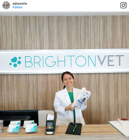 Eiji at Brighton Vet | Vanillapup