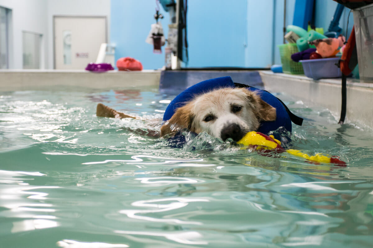 Max Says Hydrotherapy is Fun | Vanillapup