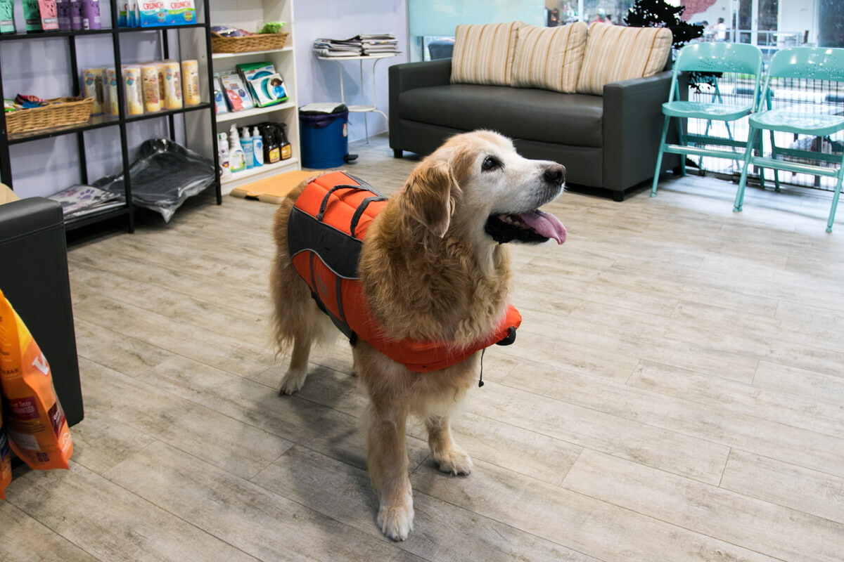 Maximus All Ready for His Swim | Vanillapup