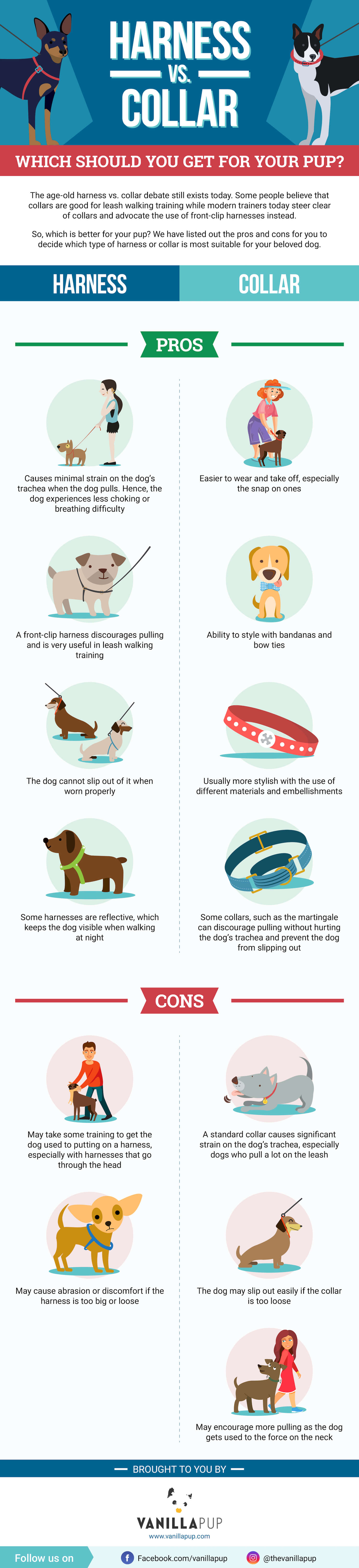 Infographic - Dog Harness vs Collar | Vanillapup