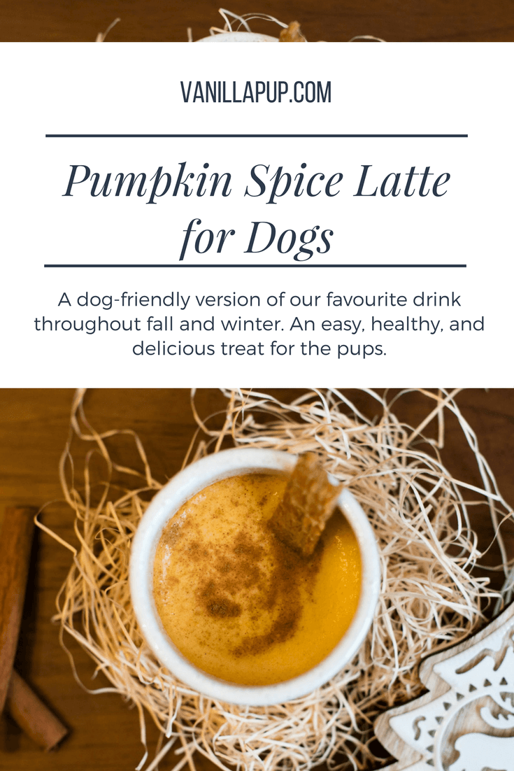 Pumpkin Spice Latte for Dogs Recipe | Vanillapup