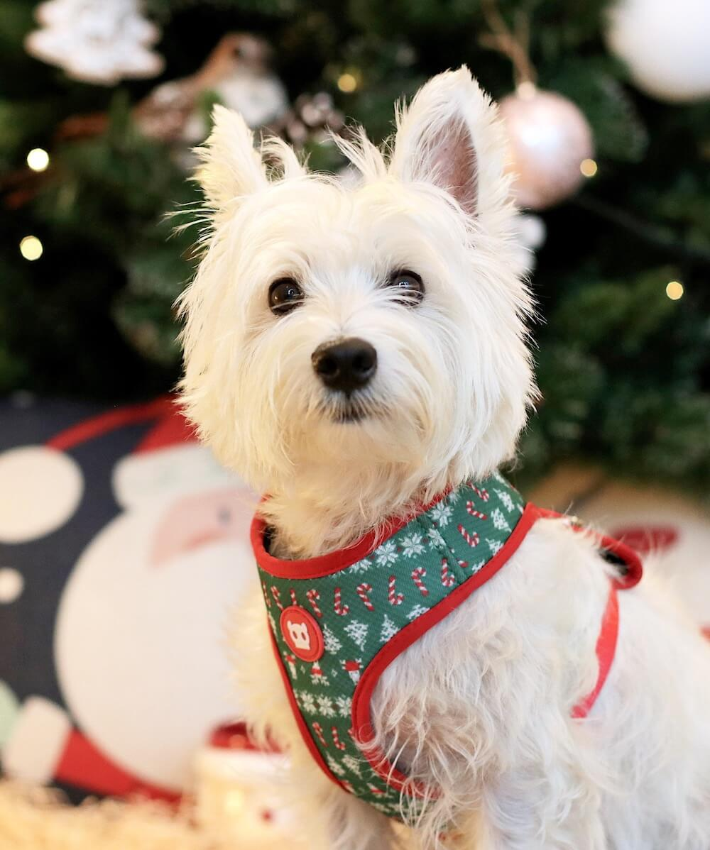 Zee.Dog Rudolph Air Mesh Plus Christmas Harness | Vanillapup