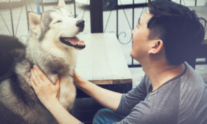 How to Approach a Dog You Don't Know | Vanillapup