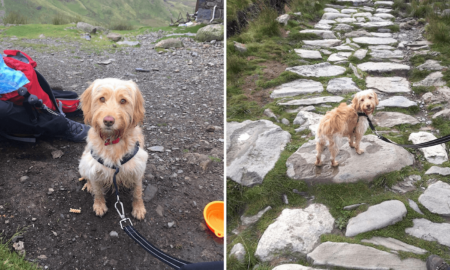 Hiking With Dogs - My Snowdon Adventure With Luna | Vanillapup