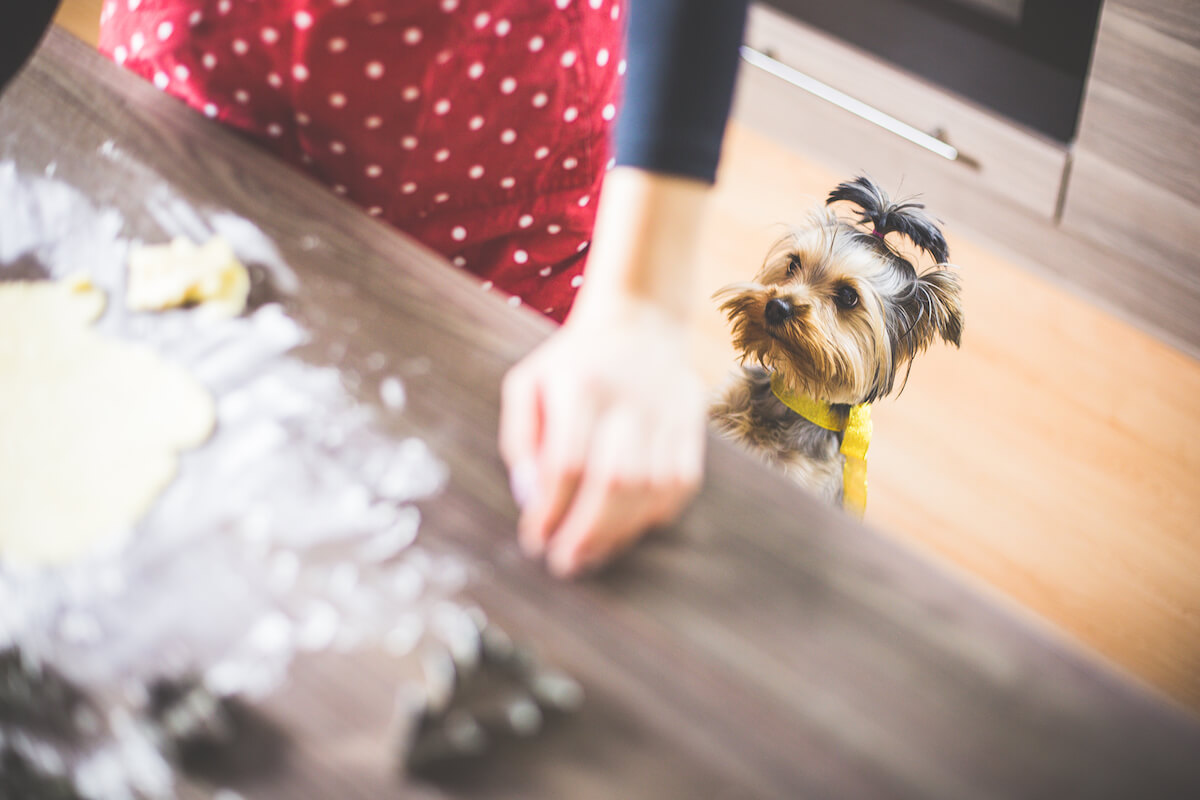 Baking Christmas Cookies With Dog | Vanillapup