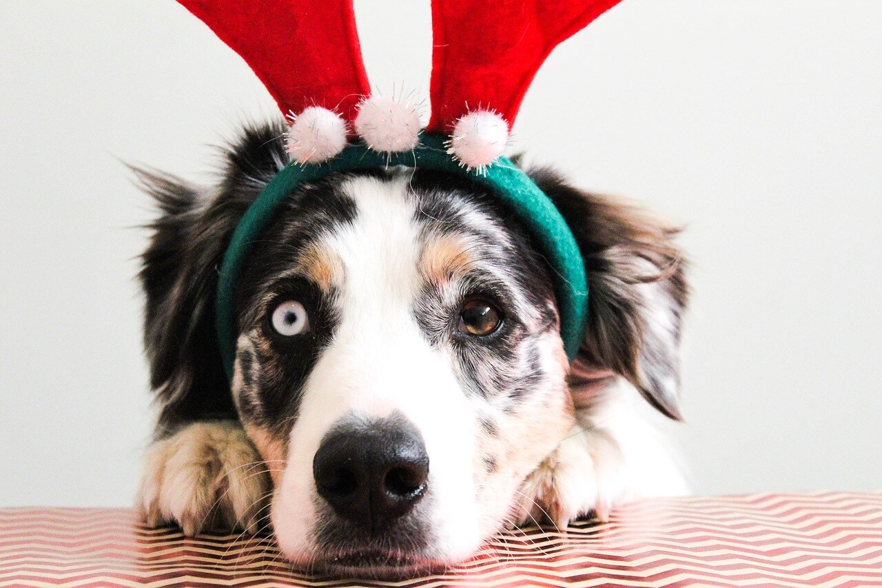 Christmas Dog Costume | Vanillapup