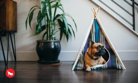 Dog in P.L.A.Y. Horizon Pet Teepee | Vanillapup