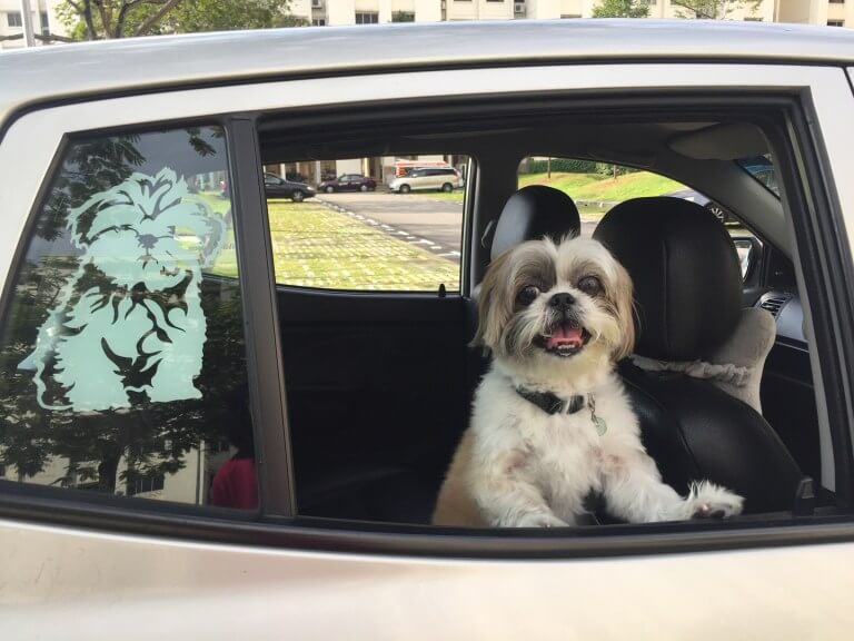 Uncle Loo Pet Taxi Singapore | Vanillapup